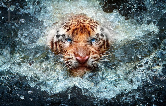 Animal-Photography-5