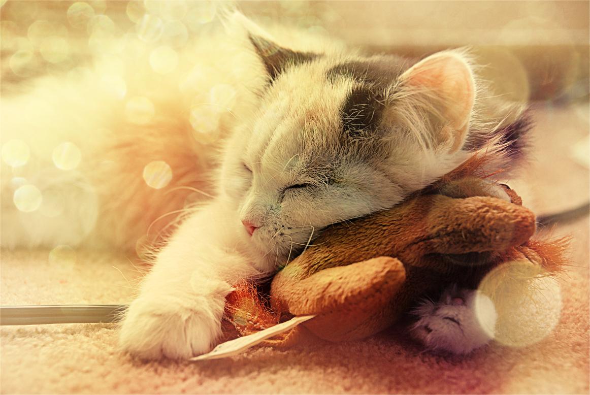 sweet_dreams__by_joflyx